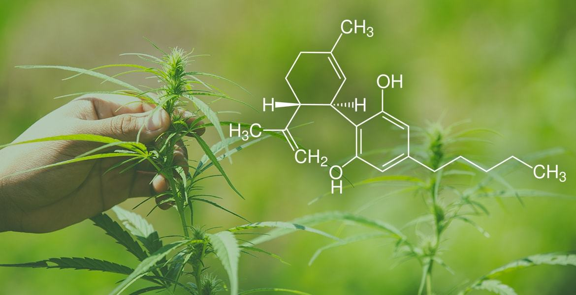 Congress is Taking an Initiative on CBD Guidelines as a Dietary Supplement